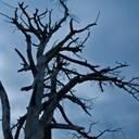 2012 год. дерево, недалеко от ЦОКа